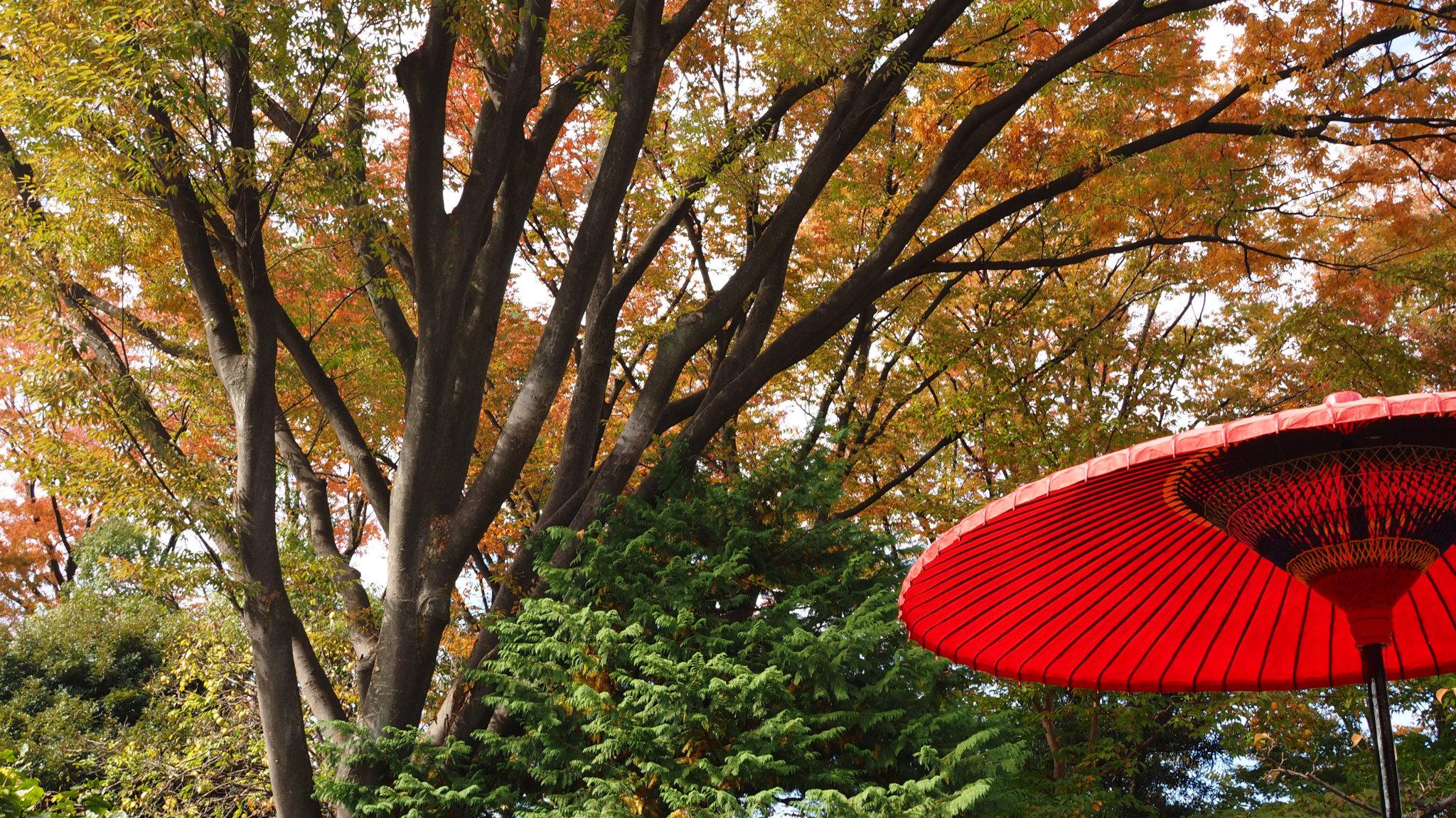恒例の赤傘