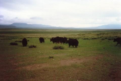 西寧草原2